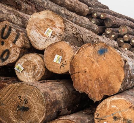 上海报关公司加拿大铁杉木材进口全面介绍